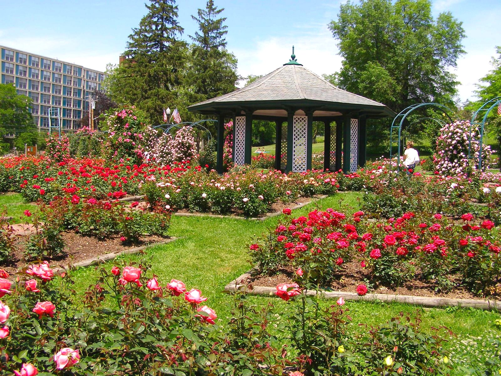 The Syracuse Rose Society Will Open A National Conference Today At The  Sheraton Hotel To Rose Enthusiasts From Around The Country.